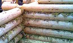 Прокладка мха между бревнами сруба (фото)